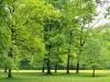 trees-field